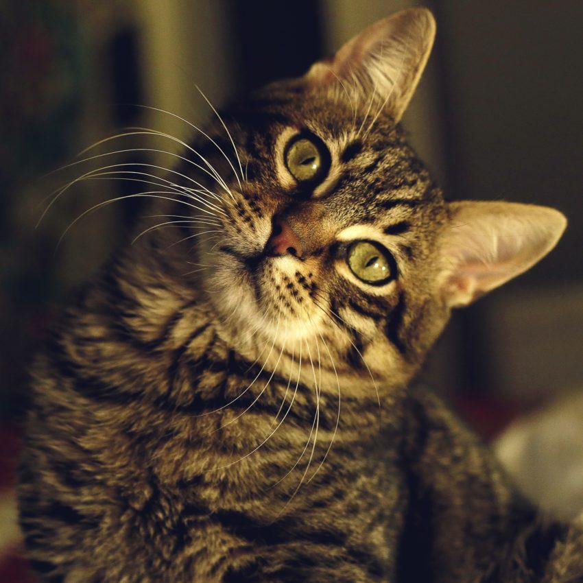 Gerar Renda Extra - Hospedar Animais de estimação ou Cuidar de Animais